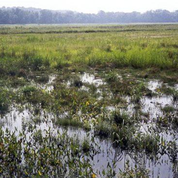 industries-wetlands-james-river1-va-feature